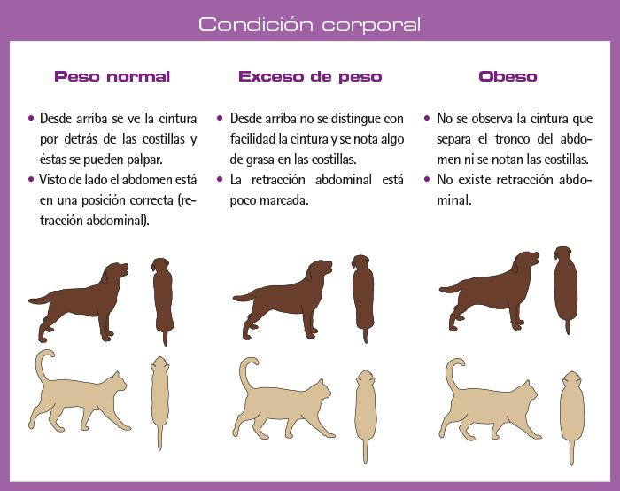Condición corporal del perro y el gato