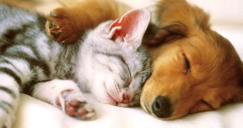 Parámetros fisiológicos en perros y gatos