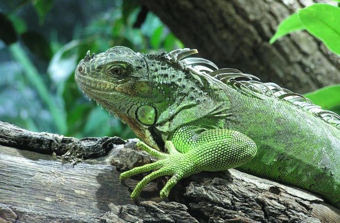 ¿Cómo se produce la hibernación en los reptiles? - Ateuves ...