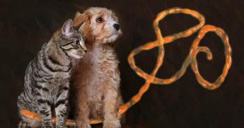 Ébola en perros y gatos.