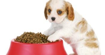 La importancia de la alimentación del cachorro.