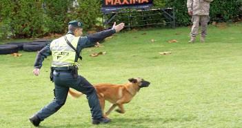 Campeonato nacional militar de adiestradores de perros
