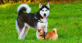 Alergias ambientales en perros y gatos