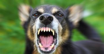 ¿Cómo actuar si nos encontramos con un caso sospechoso de rabia en nuestra clínica veterinaria?