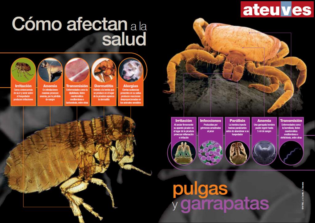 ¿Por qué hay que temer a las pulgas y garrapatas?
