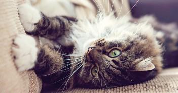 Cómo evitar el marcaje en gatos: 5 consejos para el propietario