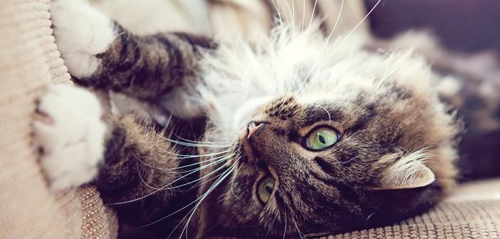 C mo evitar el marcaje en gatos 5 consejos para el for Como evitar los gatos en el jardin