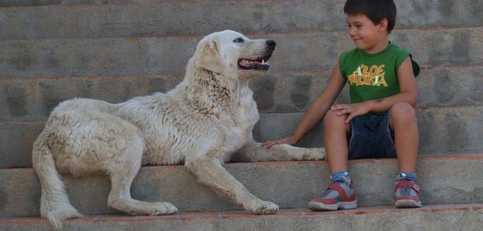 Enfermedades transmitidas por pulgas y garrapatas a los perros
