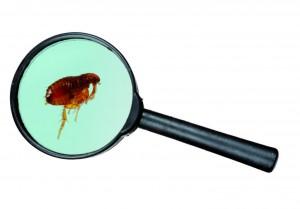 Enfermedades transmitidas por parásitos