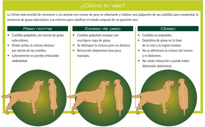 Estimación de la condición corporal de un perro
