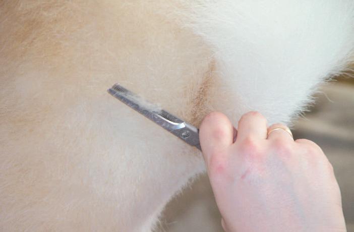 Efectos negativos del rasurado en el perro
