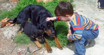 Niños y zoonosis