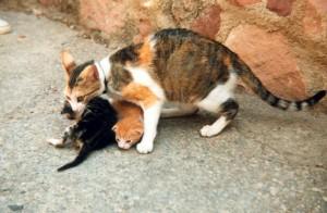Gata tricolor con una camada de gatitos