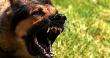 Manejo de perros agresivos