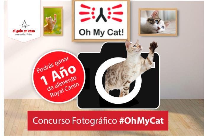 Nuevo concurso fotogr fico de el gato en casa ateuves - El gato en casa ...