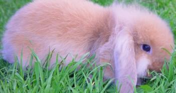 Patologías del sistema renal del conejo