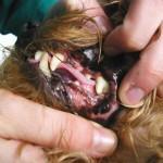 Limpieza de boca: imagen después de la odontoprofilaxis