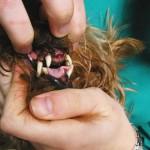 Limpieza de boca: imagen durante la odontoprofilaxis