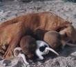 La reproducción en mascotas
