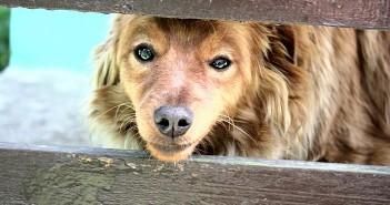 ¿Qué hay que hacer con un animal abandonado o herido?