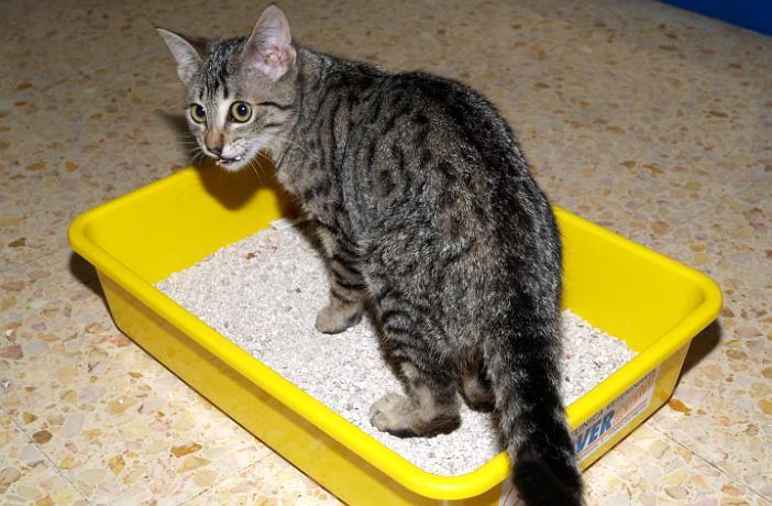 el gato no puede orinar después del catéter