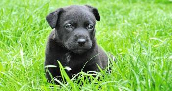 El periodo de socialización del cachorro