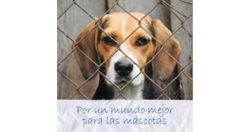Royal Canin y Mascoteros Solidarios