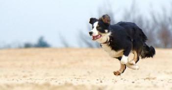 Diagnóstico y tratamiento de la artrosis canina