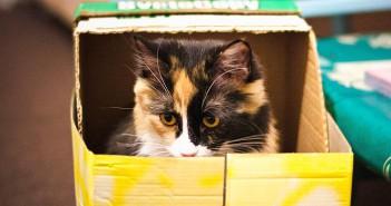 Enriquecimiento ambiental en gatos