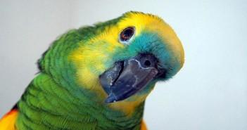 Aspectos a considerar en la hospitalización de aves