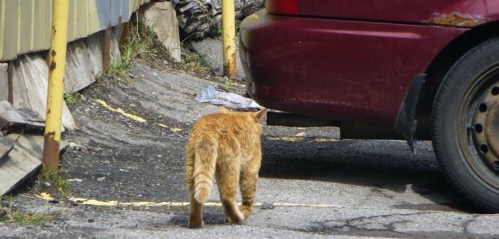 Cómo prevenir el abandono animal