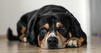 ¿Qué es la artrosis canina?