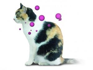 Producción de feromonas en la gata