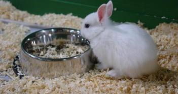Trastornos metabólicos del conejo