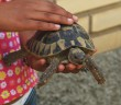Enfermedades de las tortugas: ¿cuáles son las más frecuentes?