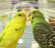 ¿Pueden morir de pena las aves al perder a su pareja?