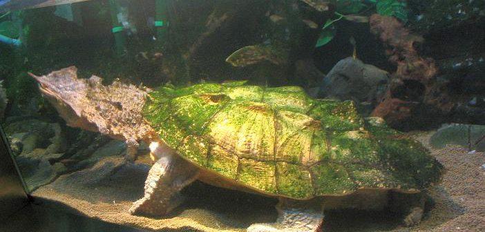 Hipovitaminosis A enfermedades de las tortugas