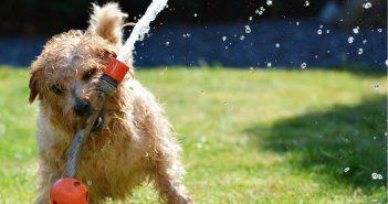 Cuidado del perro en verano