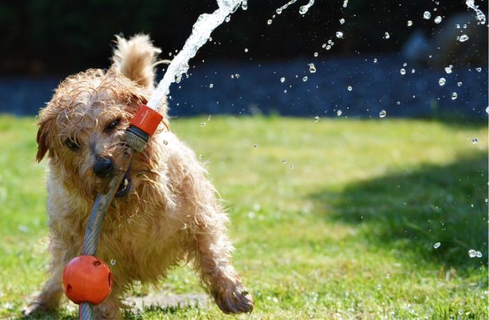 perro manguera mojado