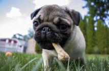 Alimentación del cachorro: trastornos nutricionales