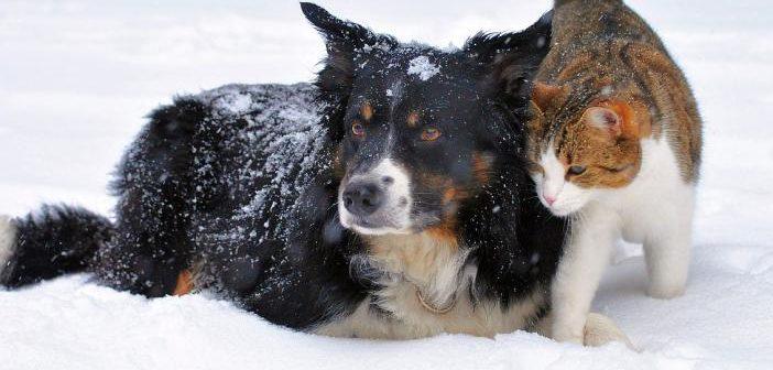 Las enfermedades del invierno en perros y gatos