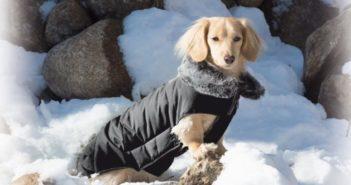 Nuevo abrigo para perros Tamarack Jacket de Gloria cabecera