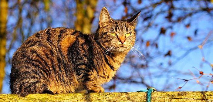 Síntomas, diagnóstico y tratamiento de la artrosis en gatos