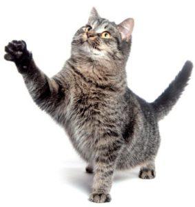 Artrosis en gatos foto 1