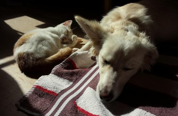 Dietas caseras perros insuficiencia renal