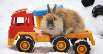 Principales patologías del conejo