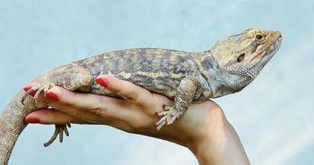 Consejos que debes dar a futuros propietarios de animales exóticos