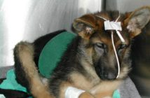 Vías de administración de alimentos en animales hospitalizados
