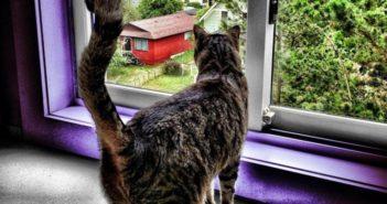 ¿Cómo crear un ambiente que respete el bienestar del gato casero?