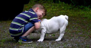Perros y niños: los perros necesitan su espacio